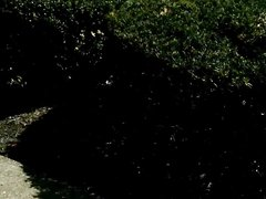 Зрелая туристка в видео от первого лица сосёт член любовника до окончания на сиськи