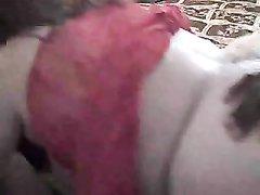 Зрелая белая толстуха в домашней групповухе дырками обслуживает чёрные члены